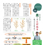 水稲栽培における刈り取り適期、収量判断