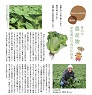 安佐南区川内の広島菜