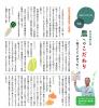 秋野菜の播種時期と収穫期