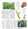 佐伯区旭園のモロッコ豆